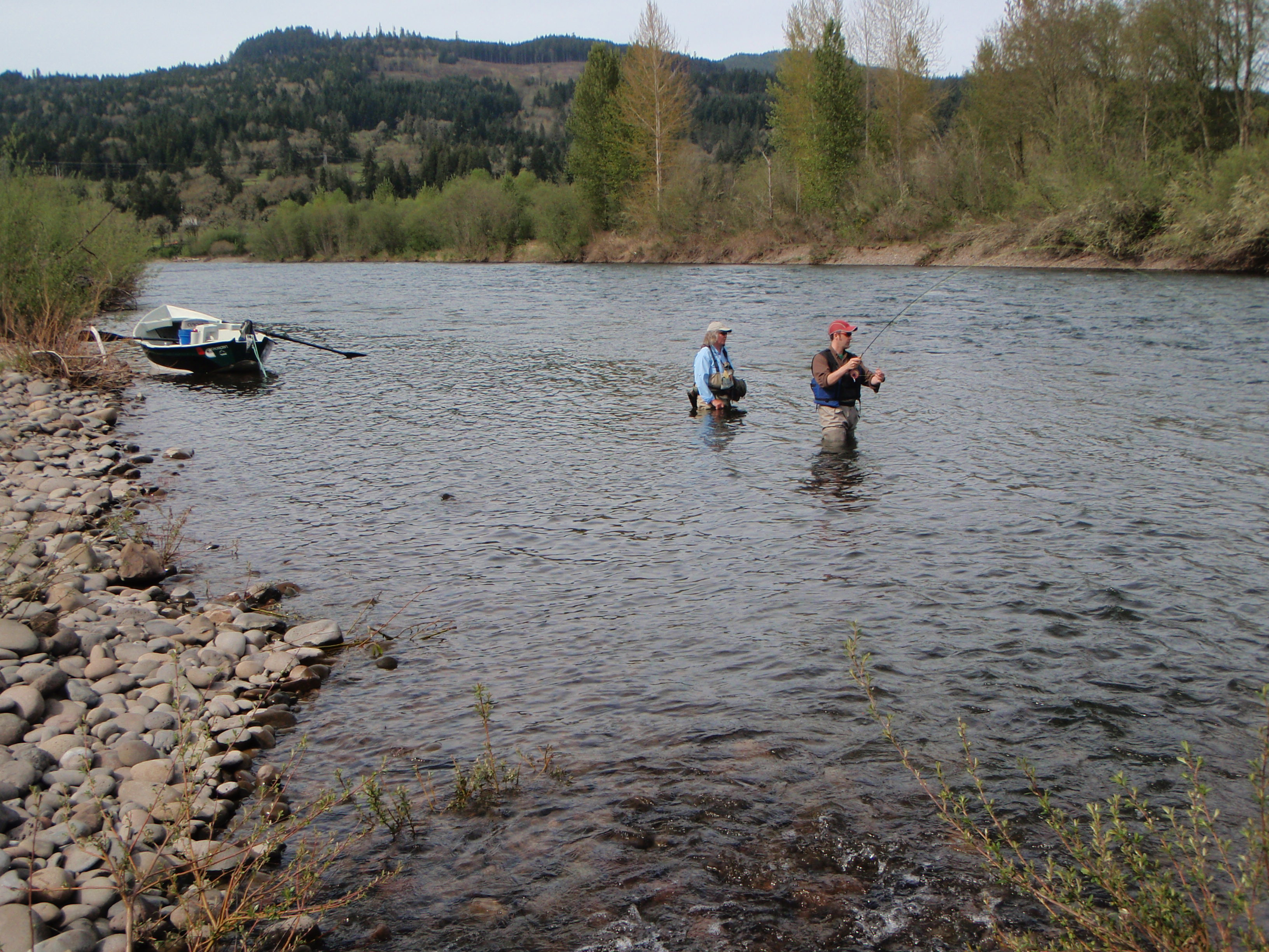 Guiding on the mckenzie river fly fishing pursuits for Mckenzie river fishing