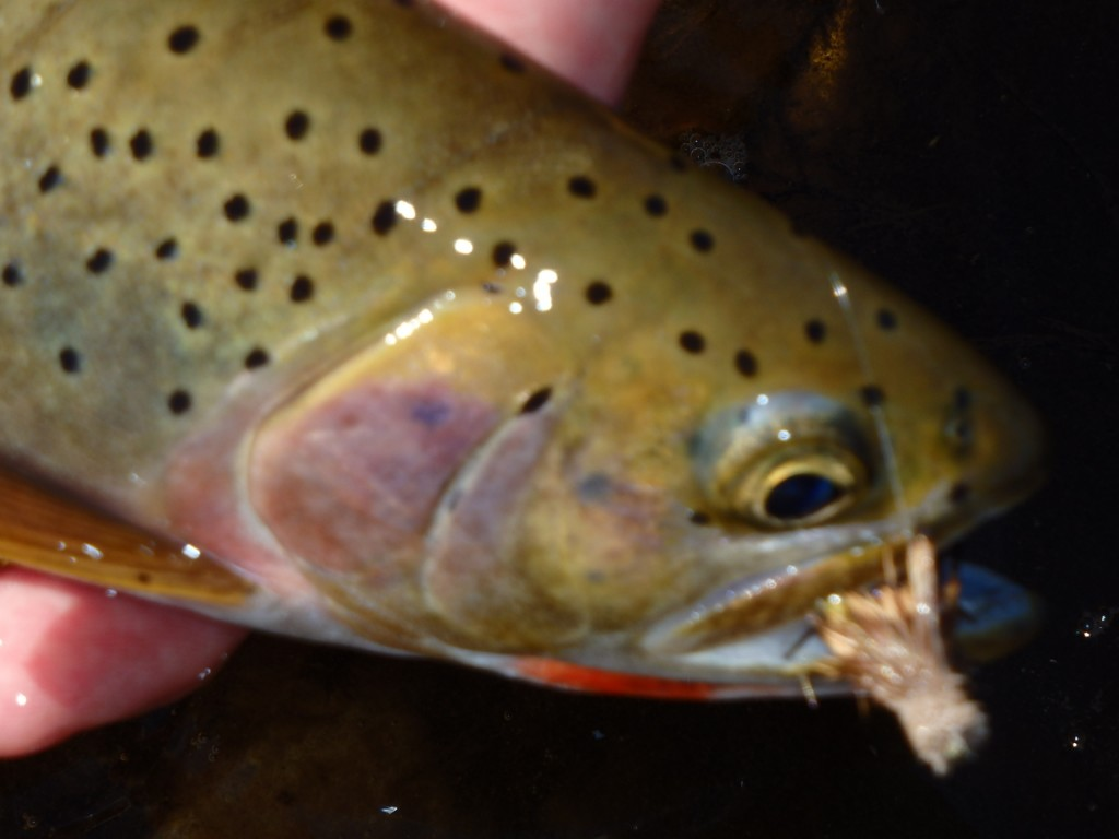 Ok a little out of focus - but still a pretty fish